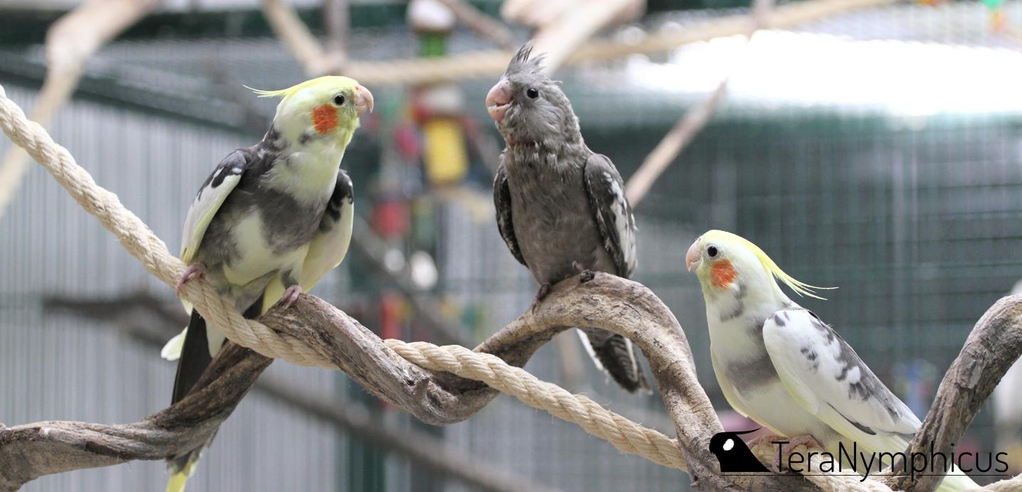 Linnut sosialisoimassa